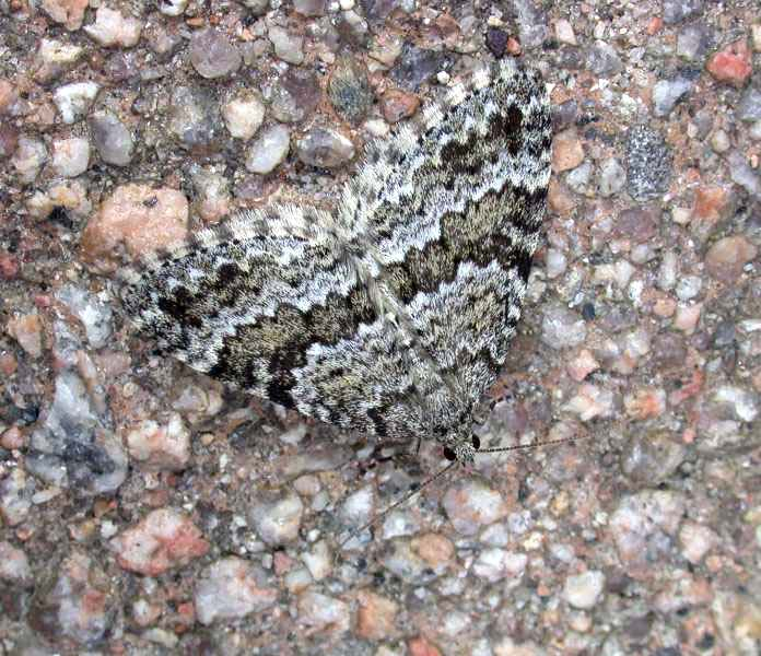GREY MOUNTAIN CARPET - GLENSHEE
