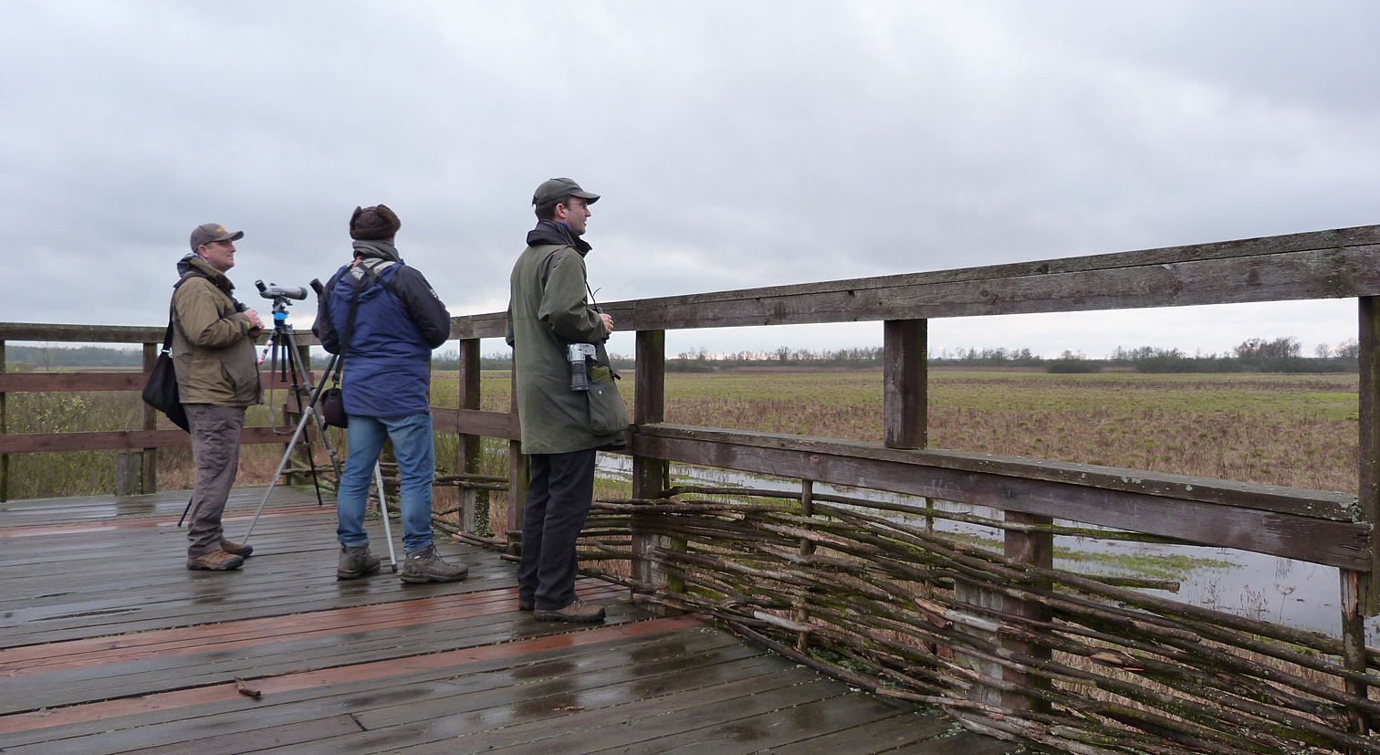 BUBO lads on the Great Snipe viewing platform