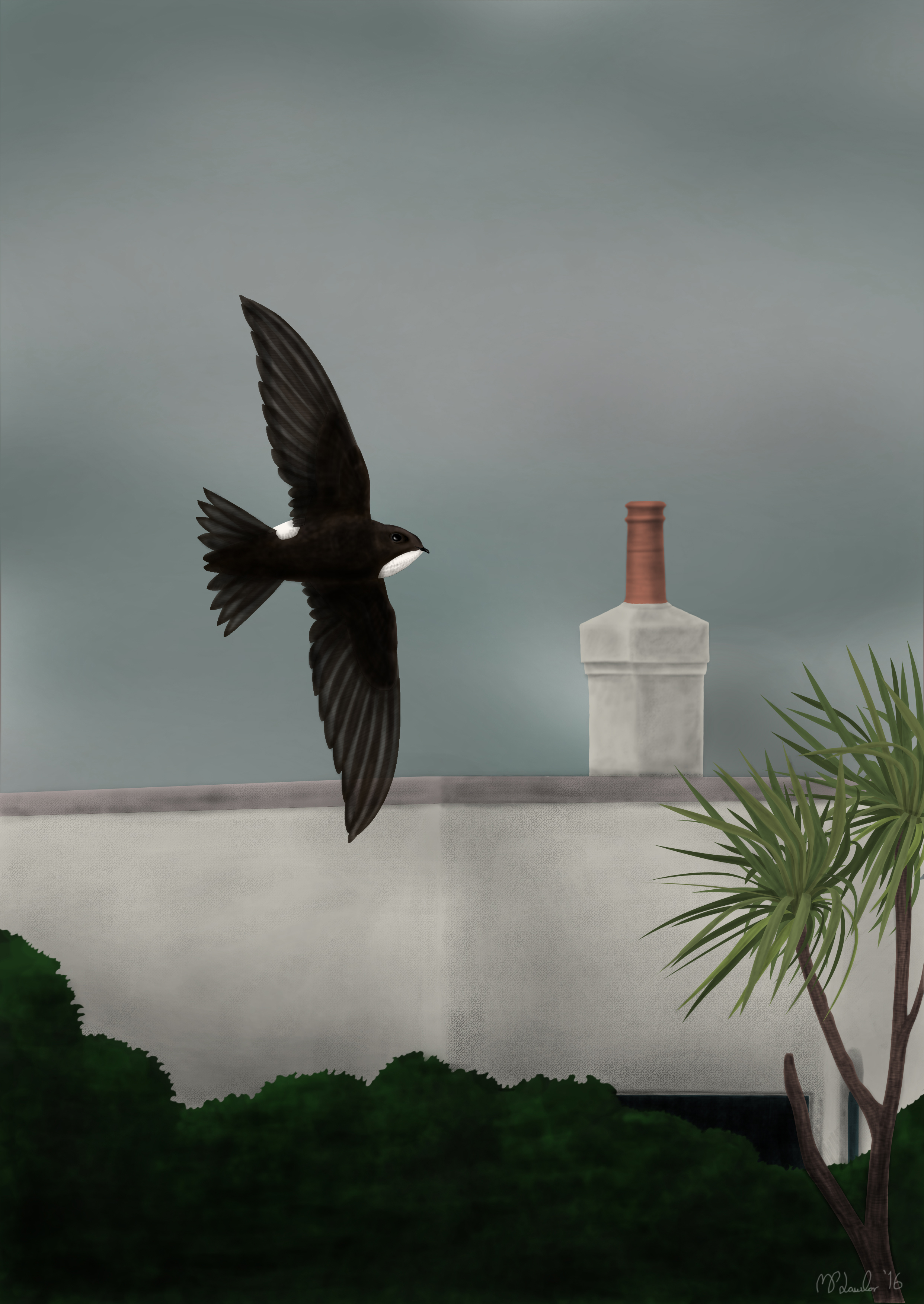 drawing of last year's Little Swift for the cover of the 2015 rarities report which is available to download from the rarity report page, accessed via the tab at the top of the page.