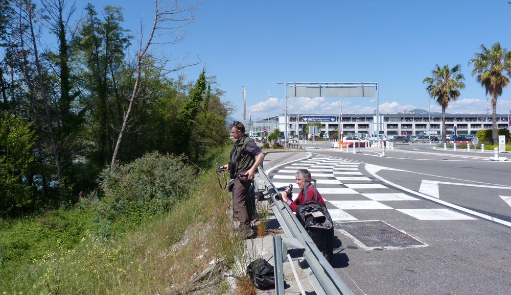 Nice Airport birding