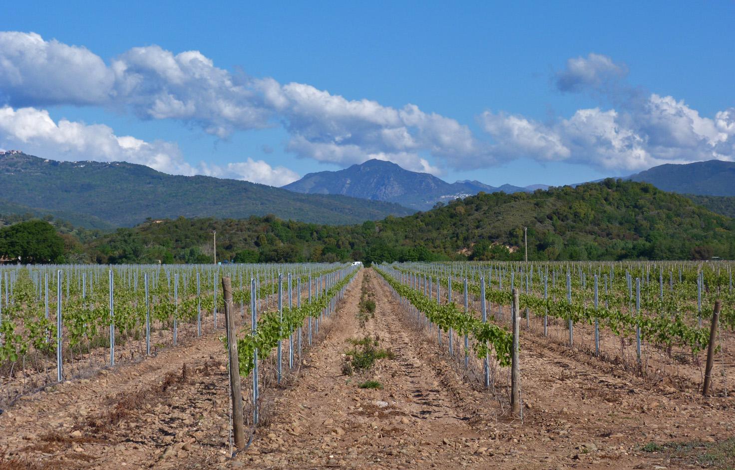 Vinefields near Aghione, Aleria