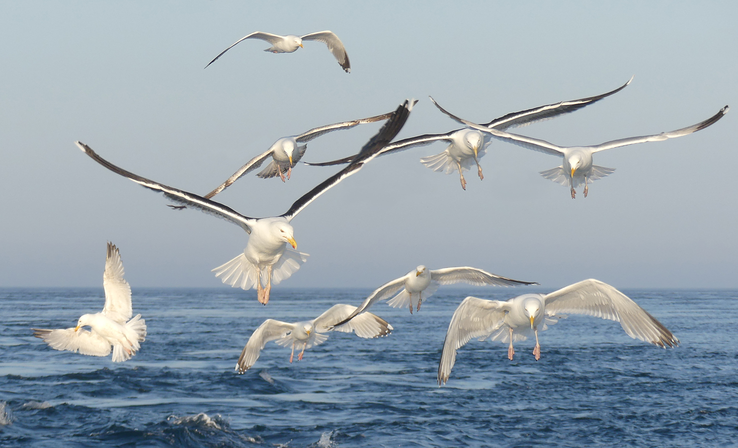 Gulls following the boat - I love the composition in this photo, almost balletic.