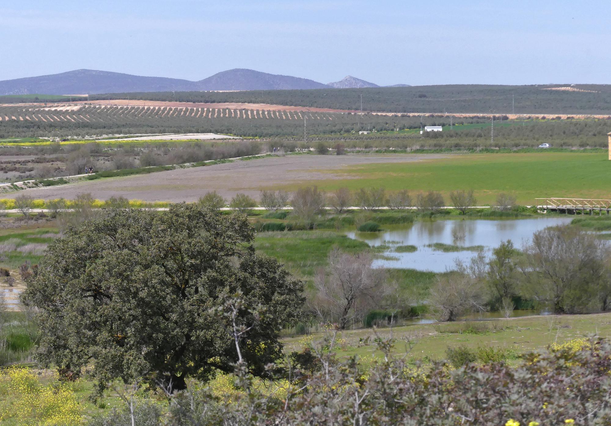 Pools by the visitor centre -  Fuente de Piedra