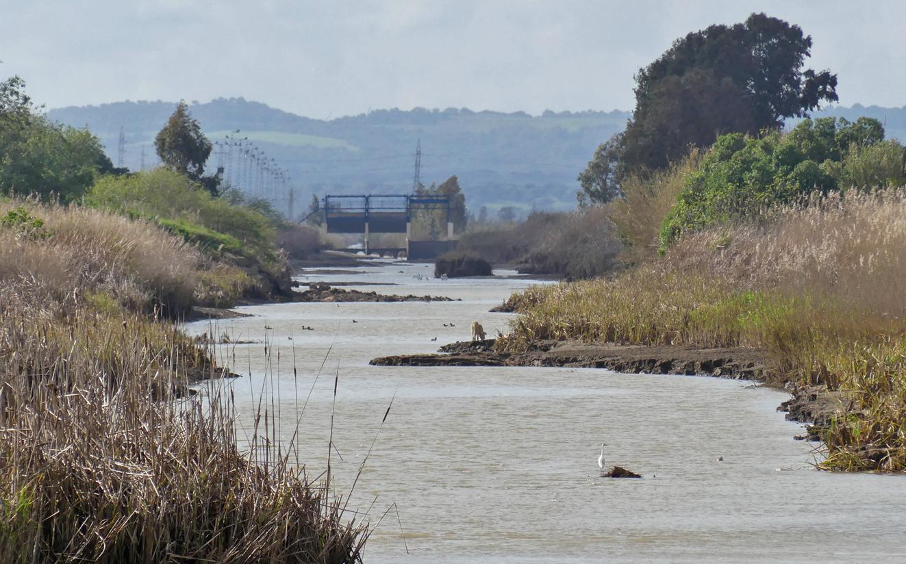 The canal at La Janda