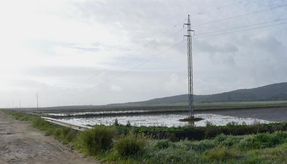 Flooded fields at  La Janda