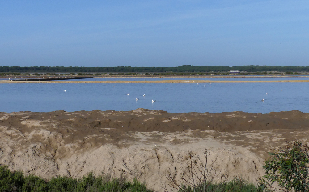 Bonanza Saltpans, with the woodlands of the southern Donana in the distance