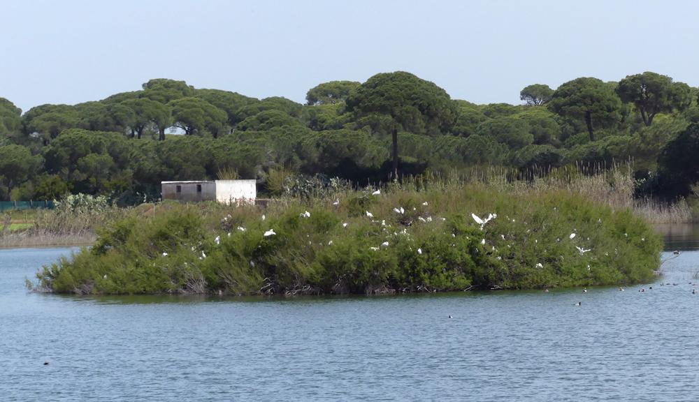 Heronry at Laguna de Terelo