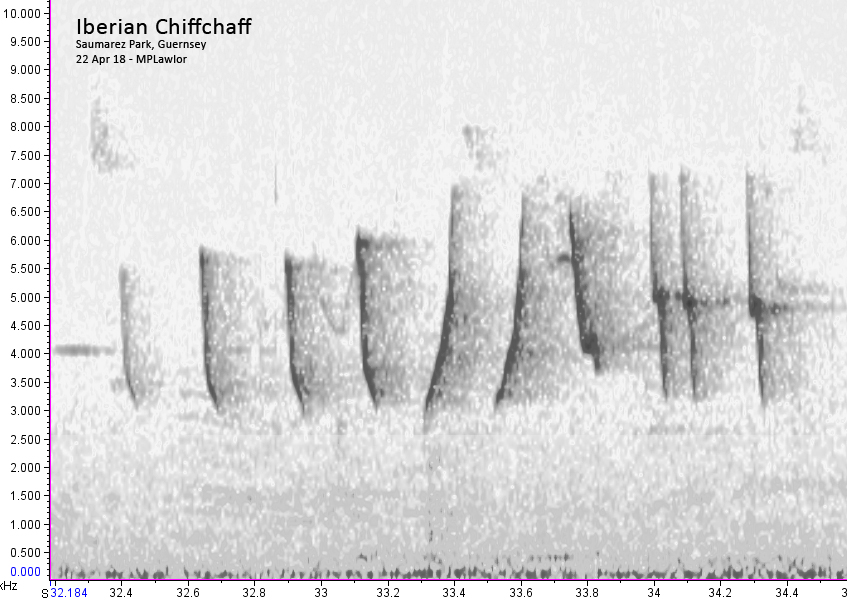 Spectogram of Iberian Chiffchaff song - Saumarez Park, 22 Apr 18