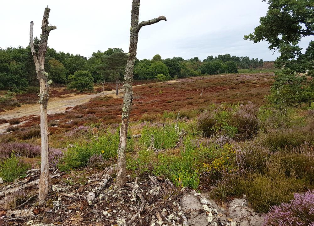 Surrey heathland at Frensham