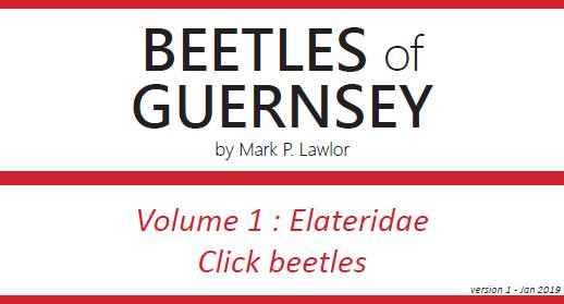 Beetles title01.jpg