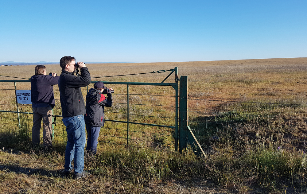 Watching our first Great Bustard SE of Santa Marta de Magasca, 12 Apr 19
