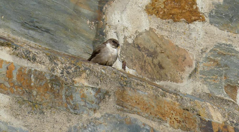 Crag Martin - Rio Almonte, 13 Apr 19