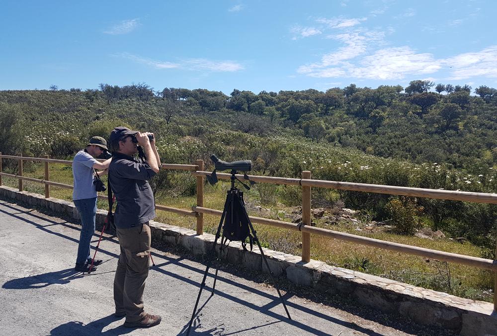Raptor-watching at Mirador La Bascula, 13 Apr 19