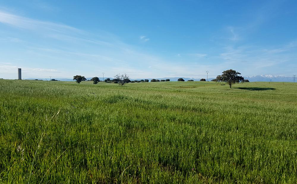 Fields north-east of Saucedilla, 13 Apr 19