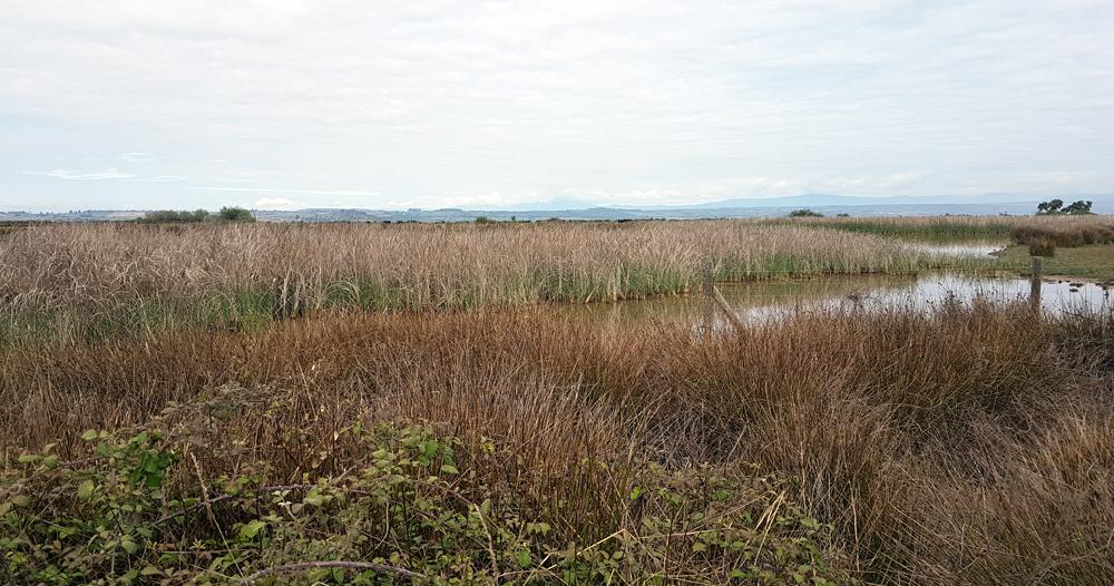 The marsh at Galisteo, 14 Apr 19