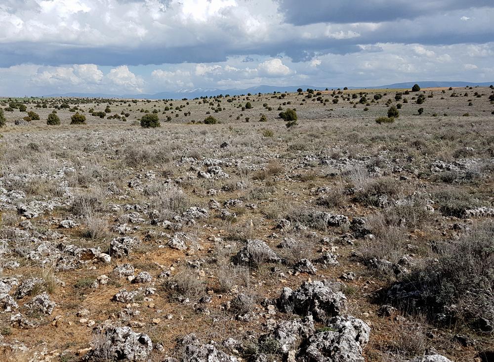 Dupont's Lark habitat - Sepulveda, 15 Apr 19