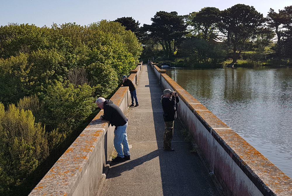 The Sultans searching at the Reservoir for species - 5 May 19