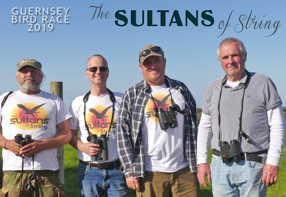 The Sultans of String - 20 years of bird races!