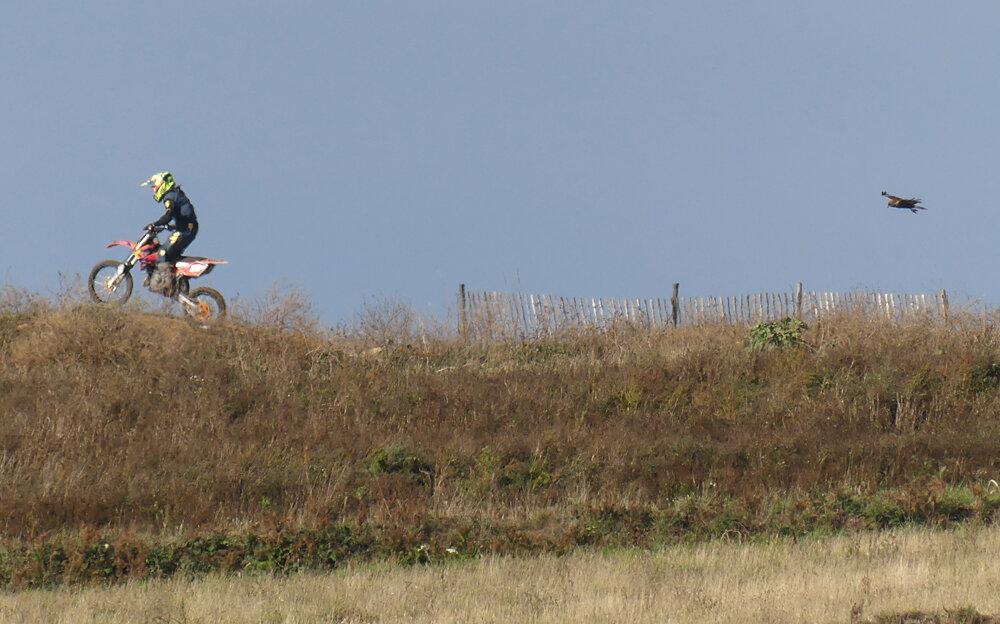 Marsh Harrier - Pleinmont, 14 Sep 19