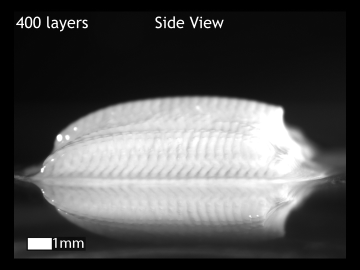 Side view: 400 layers, 3D inkjet printed calcium alginate hydrogel