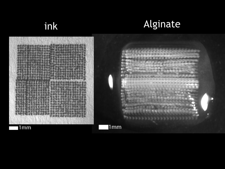 In this image, you can see how the structure of the 3D print compares to the 2D print. In place of a droplet of ink, there is a column of stacked droplets of calcium alginate Hydrogel.