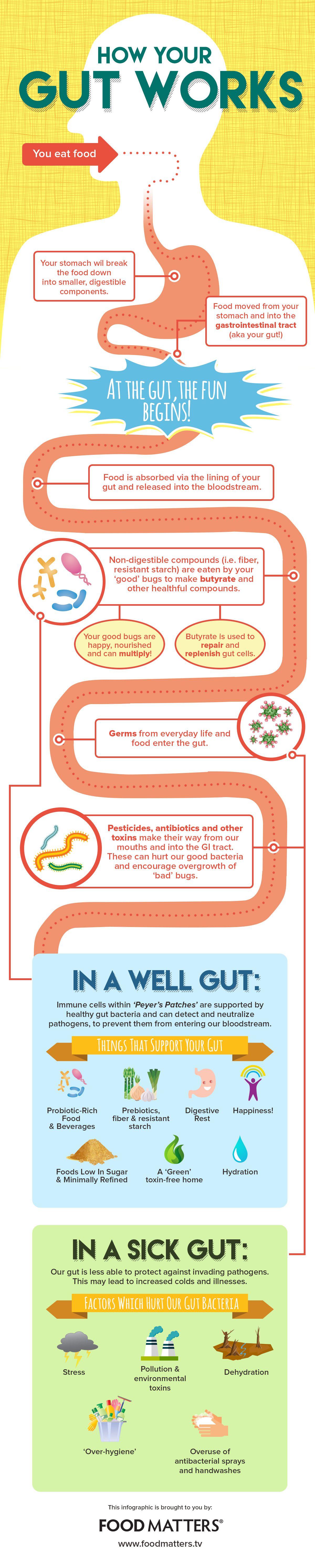 01- gut-infographic.jpg