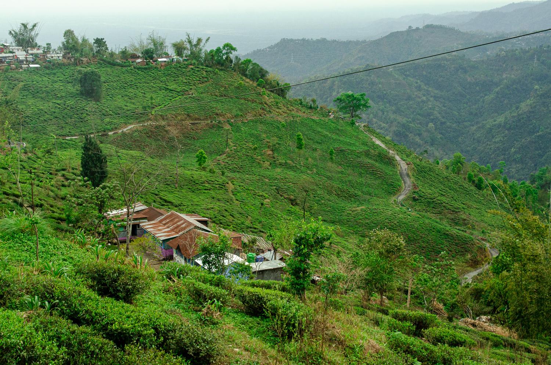 darjeeling-tea-estate.jpg