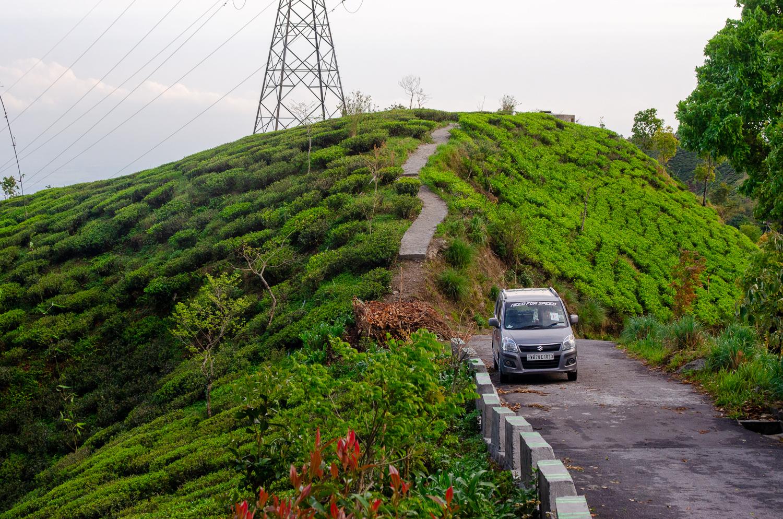 darjeeling-tea-field.jpg