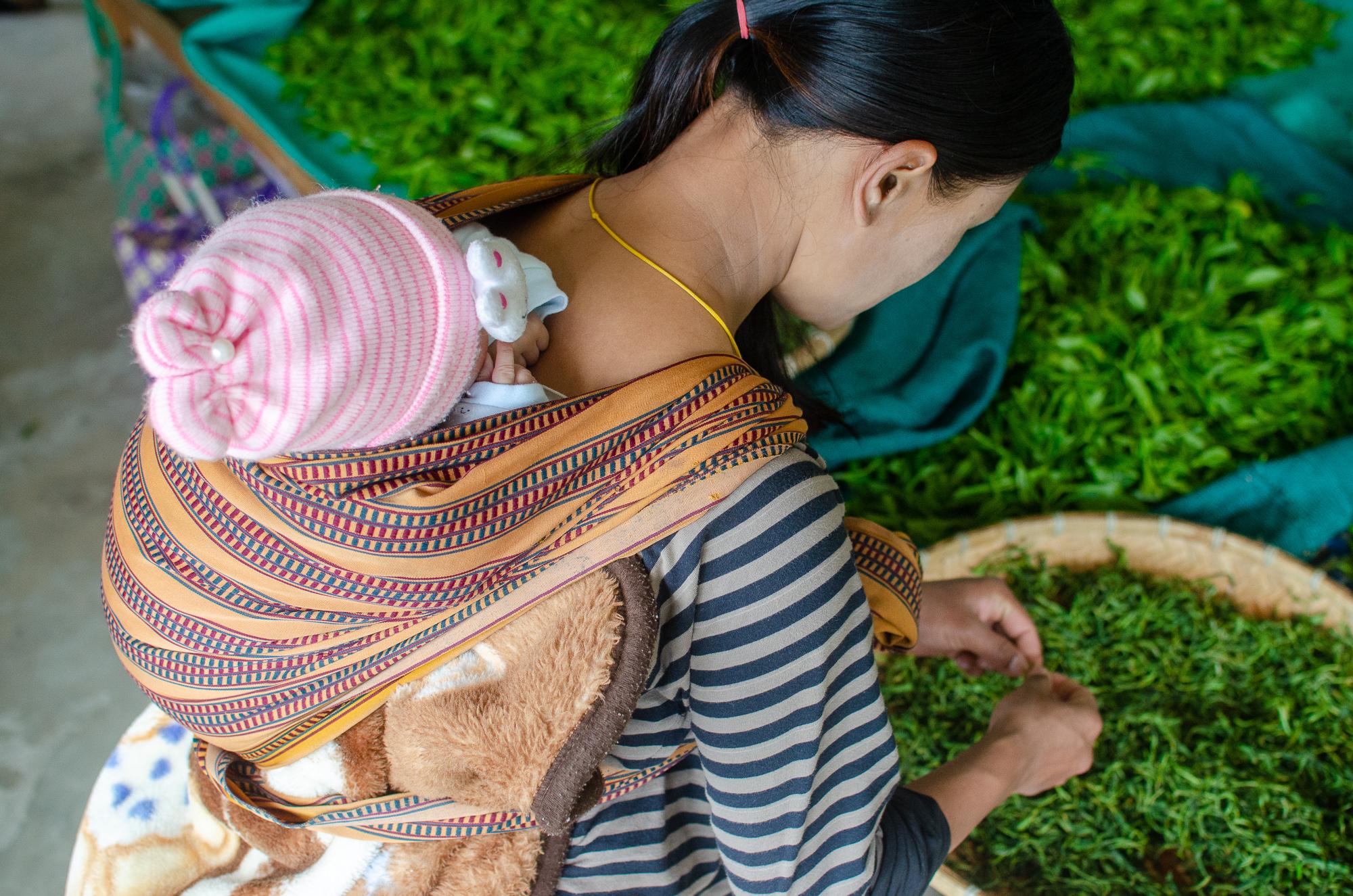 bhutan-green-tea-5.jpg