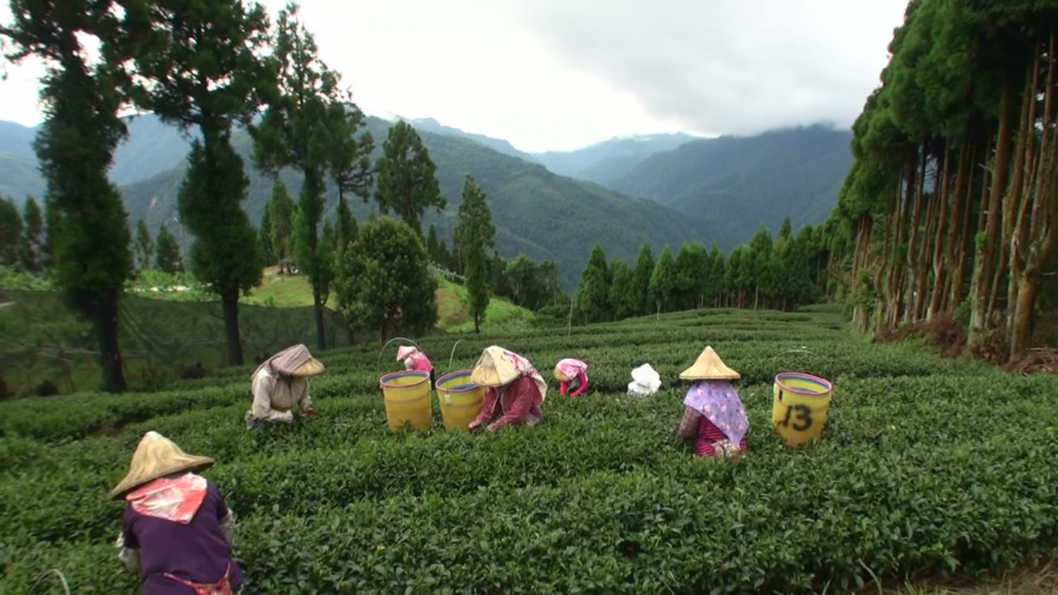 It can take a village to make a beautiful cup of tea.