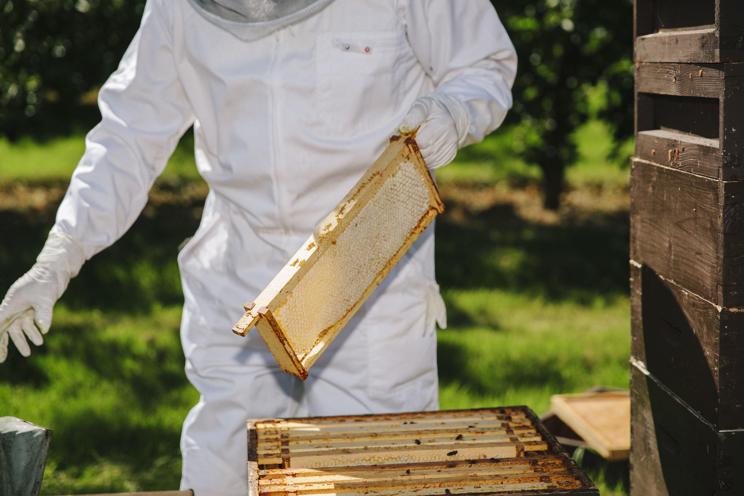 Beekeeping8.jpg