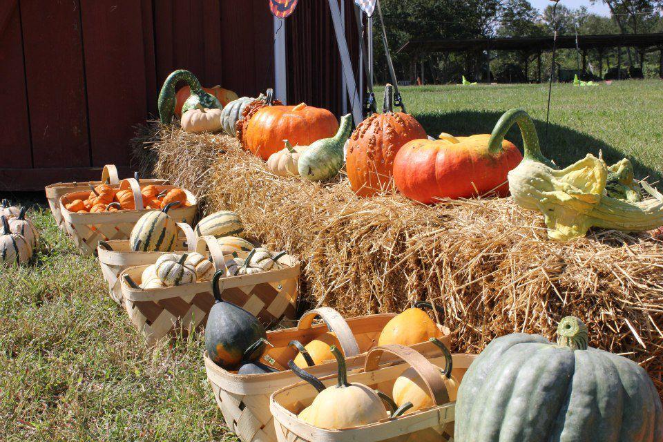Hall Family Farm 2.jpg