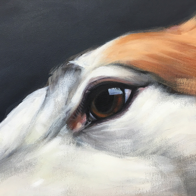 "Super close-up eye detail of ""Roo"" 