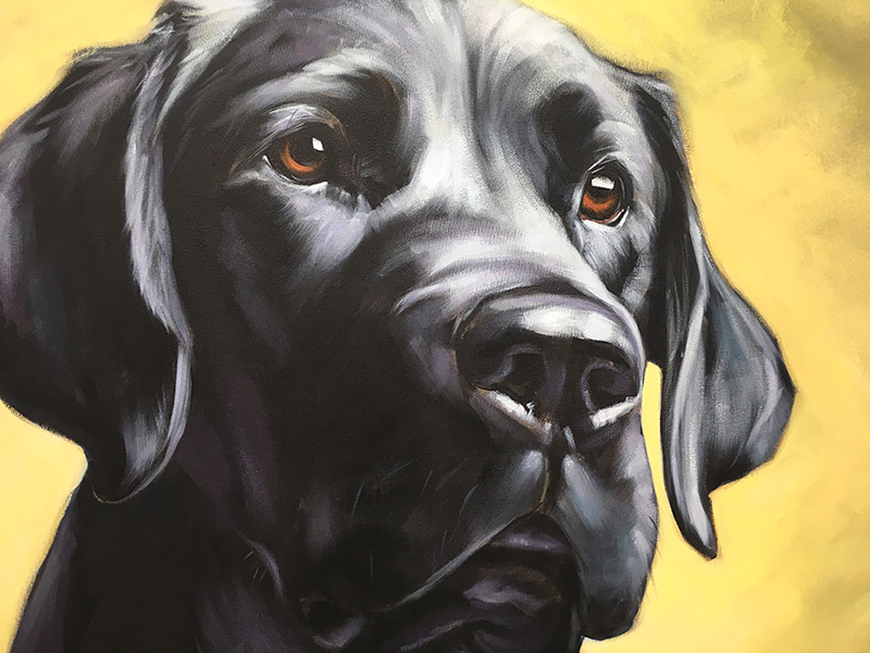 "Face detail of ""Dixie"" (Black Labrador) 