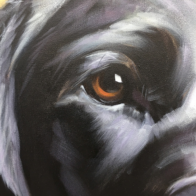 "Eye detail of ""Dixie"" (Black Labrador) 
