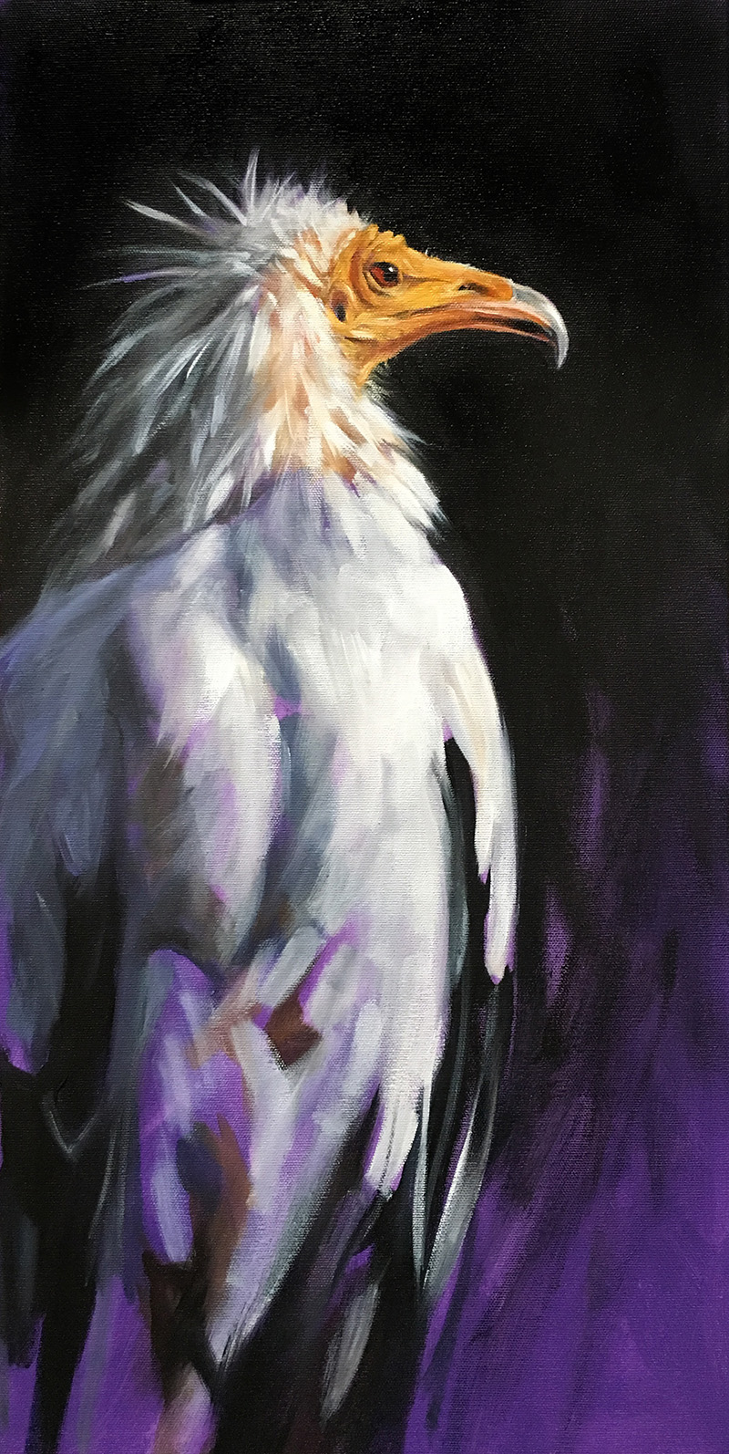 """Egyptian Vulture 