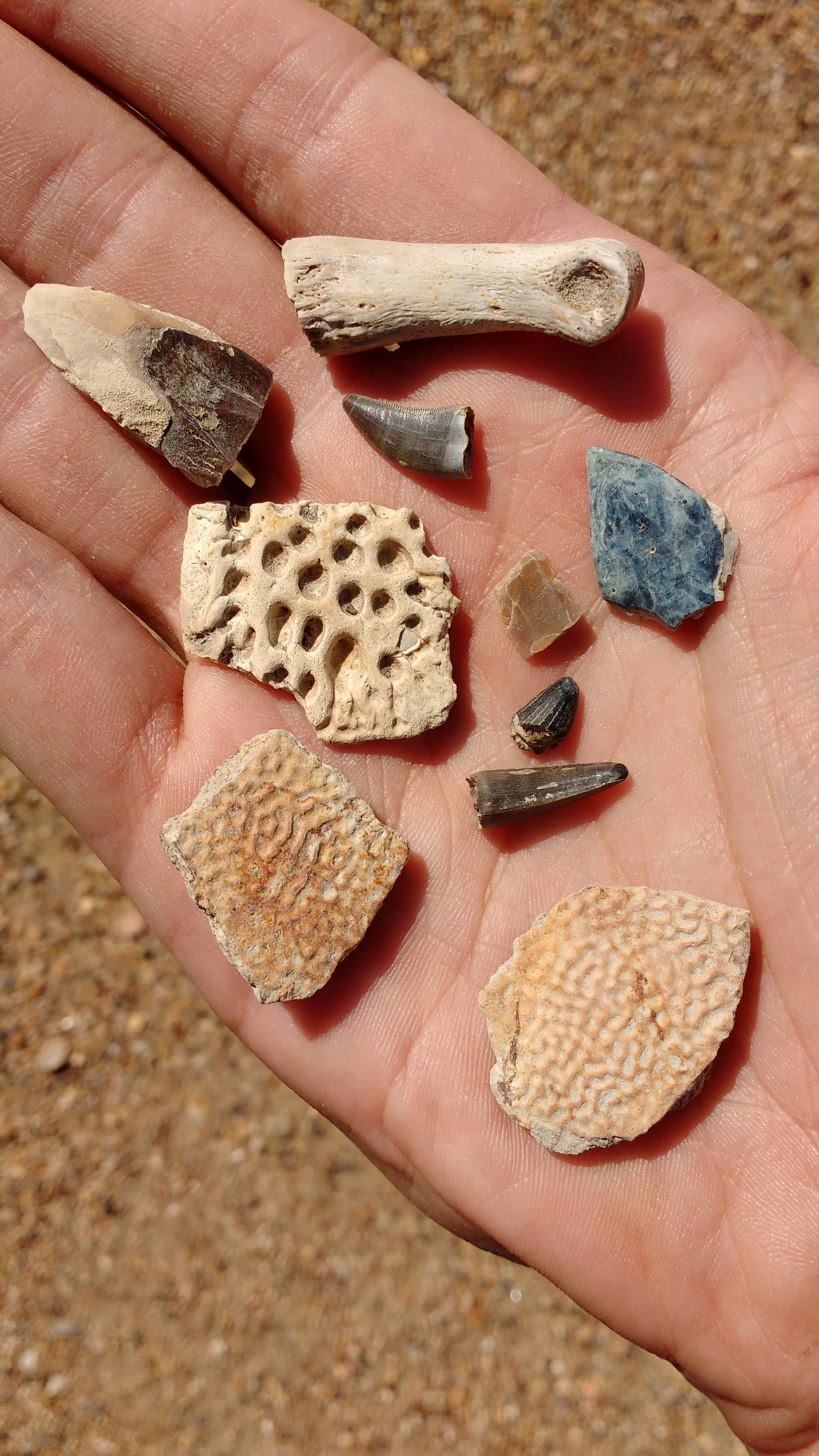 Teeth, bones, and scales found on the surface of a microsite in the Hell Creek Formation near Marmarth, ND.