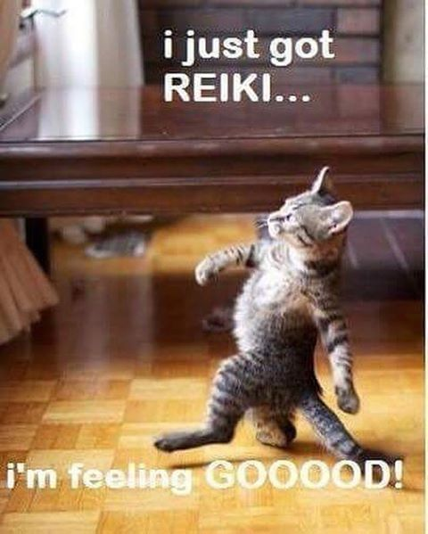 Put your paws in his shoes and get a reiki session you will not forget. Book now #wellness #feelgood #margretriver #sensorydeprivation #floating #reiki