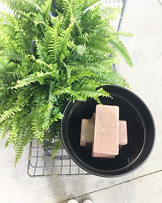 Styling a shoot and stretching our clients' dollars. We wanted the look of the oversized $32 ferns for the double door entry but went for the $12 option + a couple of $.50 bricks to raise them up in the planter, instantly making them look several feet taller ✨🌿 #protip #clientsfirst