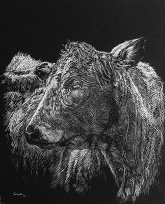 charolais-cow-web.jpg