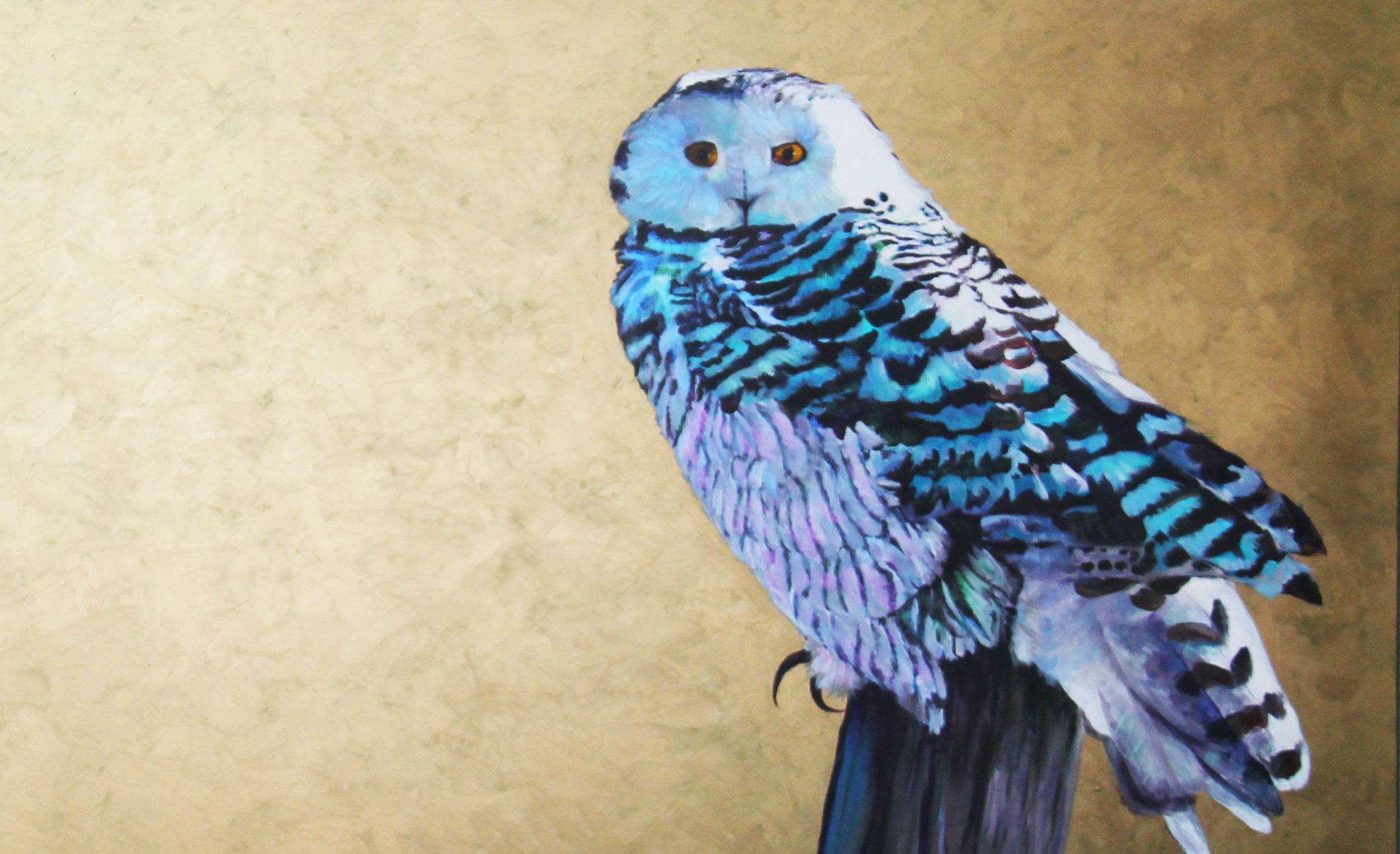 snowy owl detail.jpg