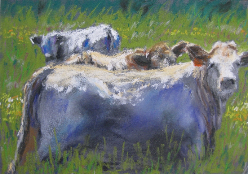 cows in clover web.jpg