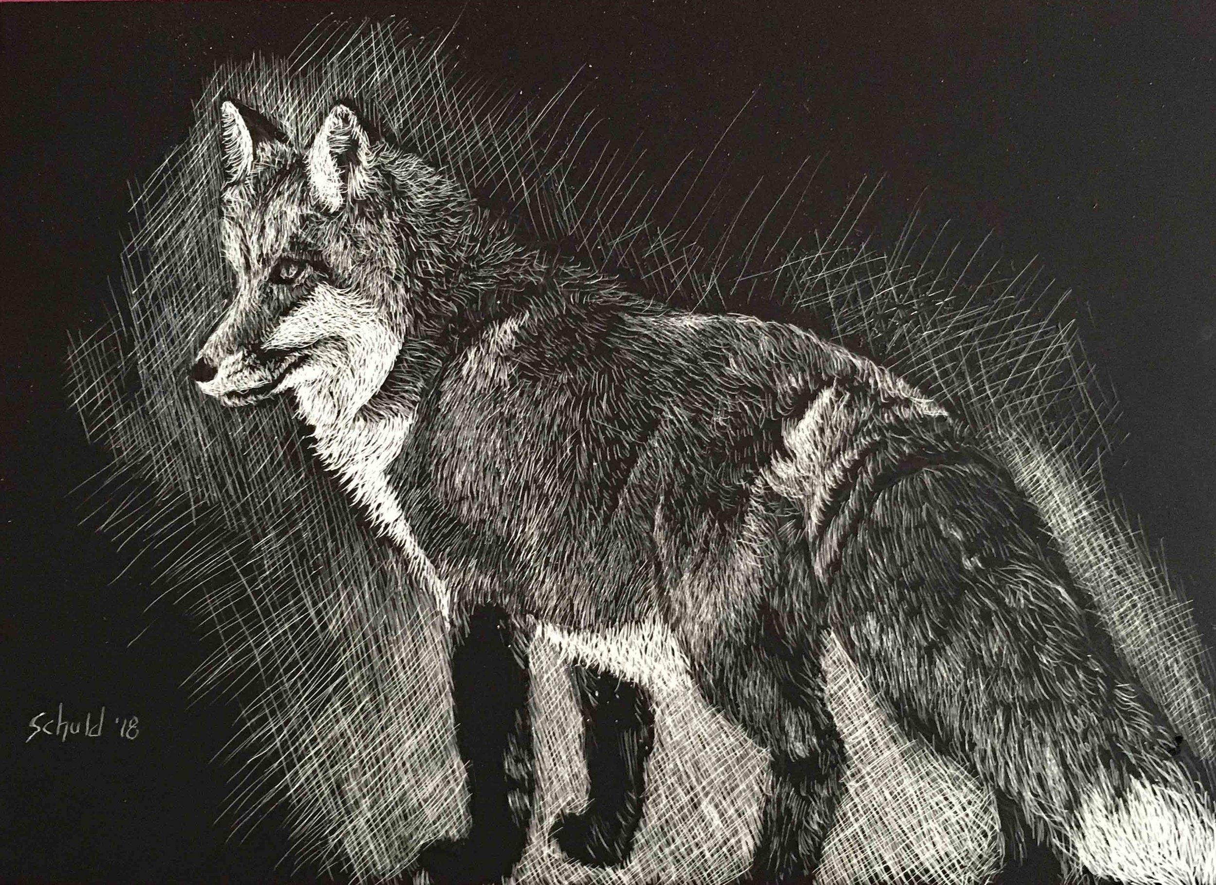 red fox thumb.jpg