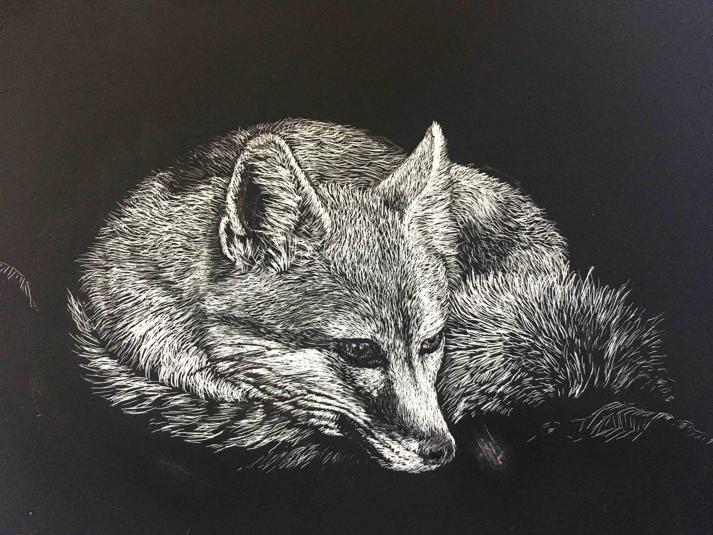 swift fox thumb.jpg