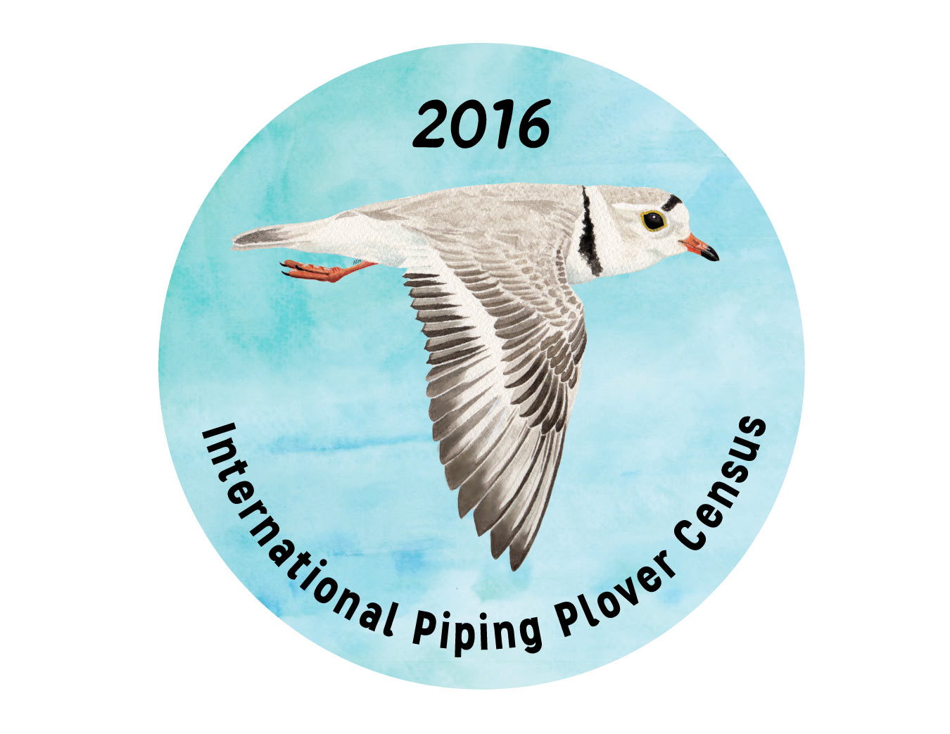 Button design commissioned by U.S.G.S for 2016 International Piping Plover survey volunteers, created with watercolor and Adobe Illustrator.