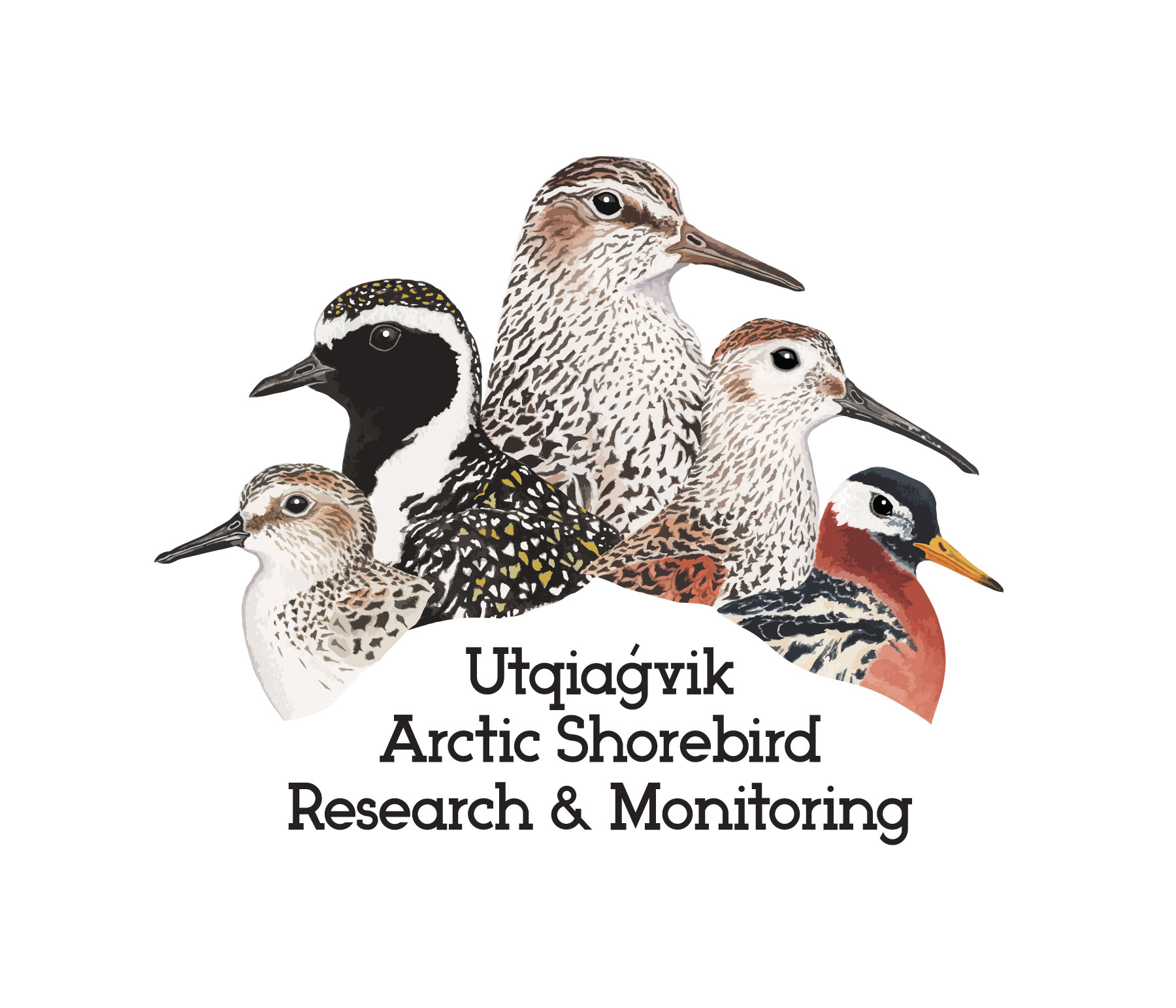 Utqiagvik Arctic Shorebird Shorebird Research & Monitoring