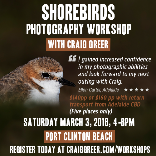 Shorebirds-workshop-March-3-500px.png