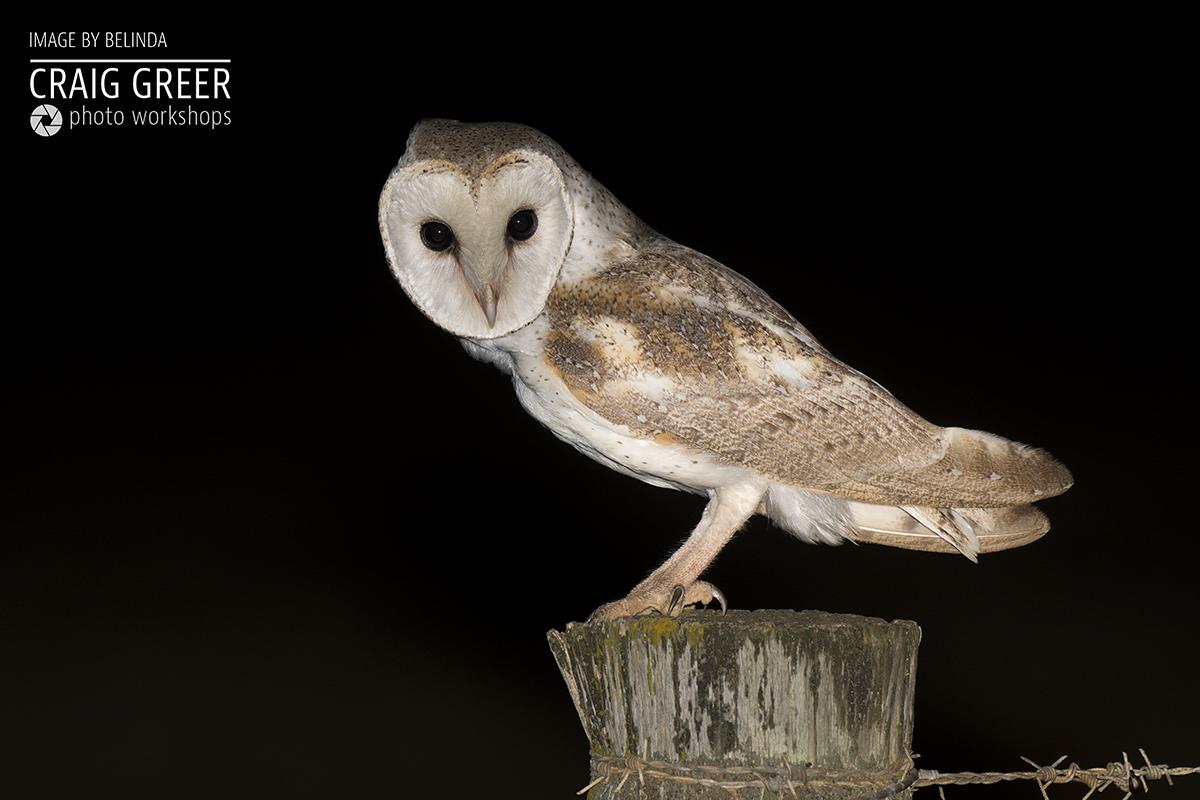 Eastern-Barn-Owl-BELINDA-01-12-18.jpg