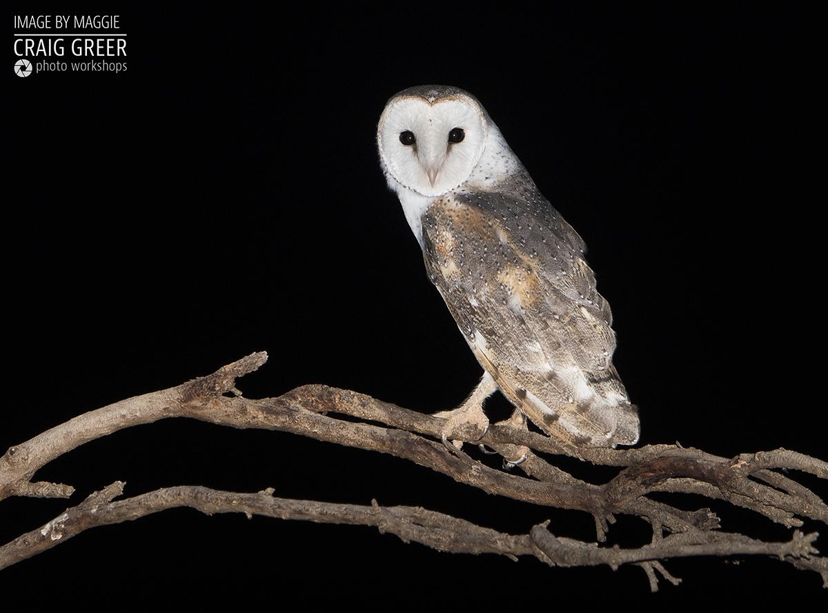 Eastern-Barn-Owl-Maggie-04-01-19.jpg