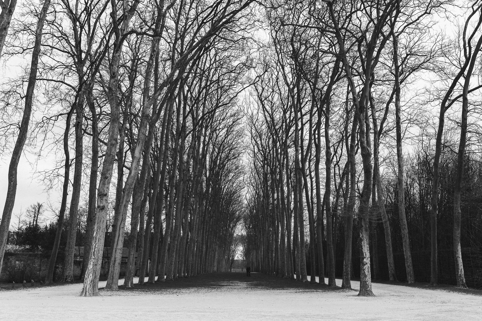 Jardins du ChâteauDe Versailles -